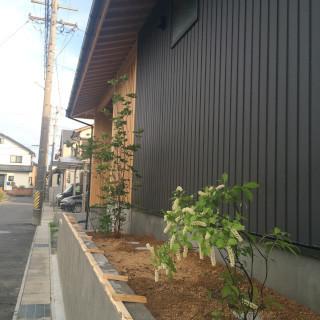 北 道路 植栽.jpg