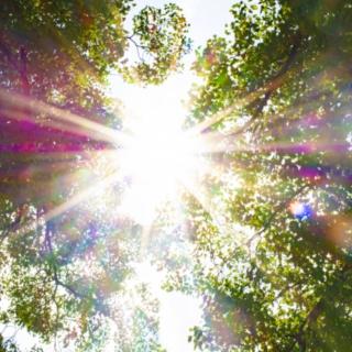 夏の陽射しイメージ.jpg