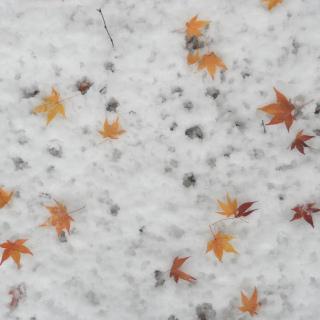 尾高 紅葉と雪.JPG