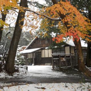 真行草 紅葉と雪.JPG
